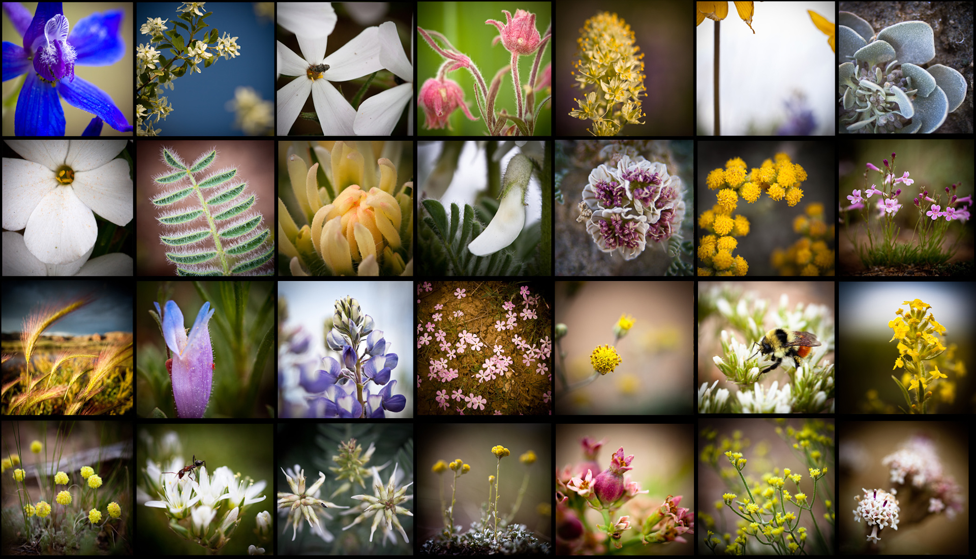 71_Flower Collage.jpg
