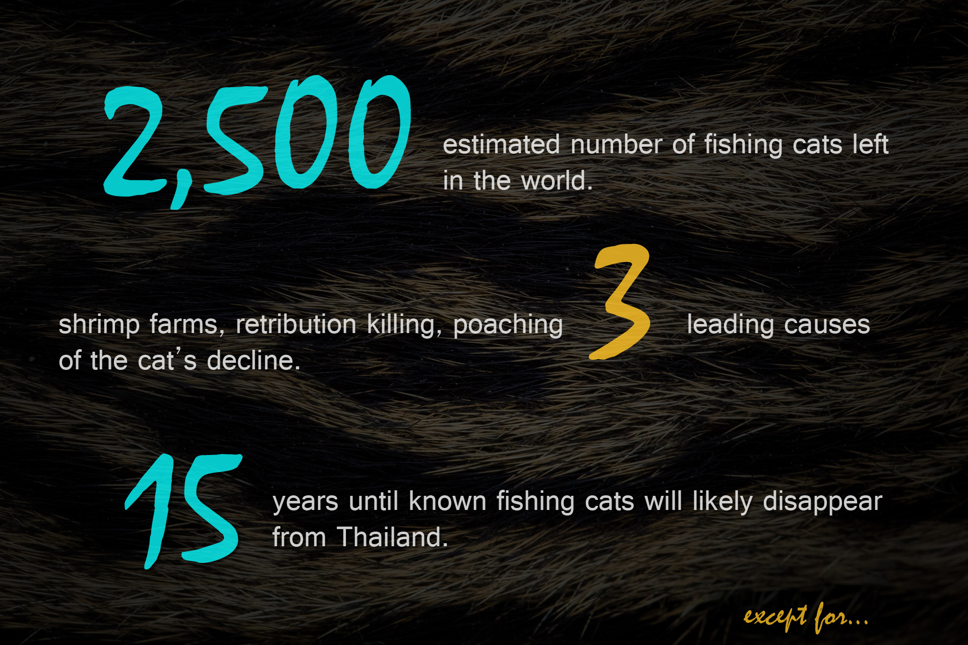 Fishing Cat Primer.jpg